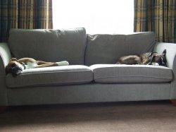 sofa w mieszkaniu